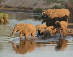 Circuit Afrique du Sud avec enfants, safari en famille savane du Maputaland - Voyageurs du Monde