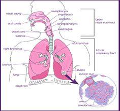 Health Effects - Air pollution