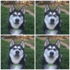 You know when you 'fake' throw something to a dog? This guy captured the exact moment his dog realized.