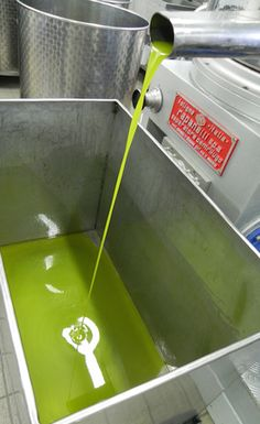 The new oil is so green - the most lovely color and smell as it drops out from the pipe. At this point we can hardly wait to taste this years olive oil.