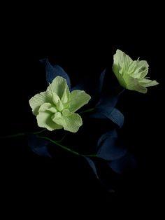 PAPETAL: Flowers