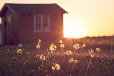Love this moment when the last bits of sun touches the plants and grass