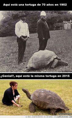 Tortugas gigantes, el ejemplo más bestia de longevidad