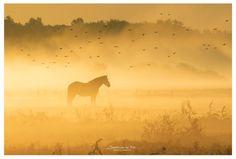 6 Tips voor het fotograferen van de mist!   Cursussen   Zoom.nl