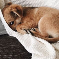When you just want to stay in bed & cuddle with this one Proudly #crueltyfree & animal LOVING since 2004 #playitup at vani-t.com #vanit
