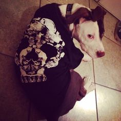 Even dogs like the Death By Kittens shirt!
