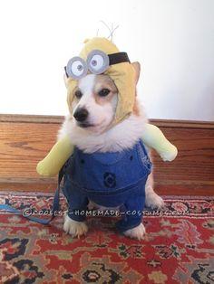 Bonnie's Crazy Minion Dog Costume… Coolest Halloween Costume Contest