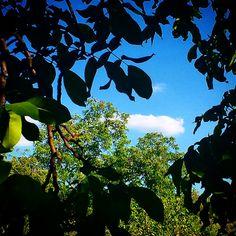 De veraneo en los linarejos (Frailes, Jaén) - De paseo y piscina con amigos en este verano... genial verano con poco calor y mucha diversión. Ah! Este paraíso de interior es en Frailes.