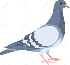 Pigeon Bird, Clip Art, Business, Illustration, Animals, Animales, Animaux, Animal, Store