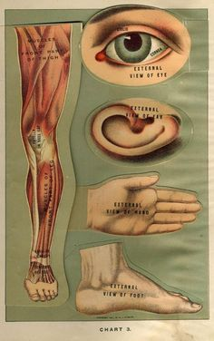 15 Free Vintage Medical Halloween Images | Remodelaholic.com