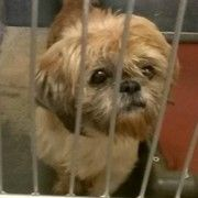 Animal shelter scary place for a nearly blind Shih Tzu with no home offer.    Innocent soul...was your only crime just being born?  your little heart beat deserves the soothing feeling of security and love