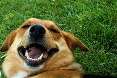 5 Things to keep your Pet's Teeth Clean With this article I would like to introduce 4 alternatives to tooth brushing to keep your pet's teeth clean.  http://www.vet-portshepstone.co.za/5-things-to-keep-your-pets-teeth-clean/