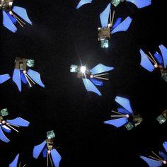Jewel Swarm