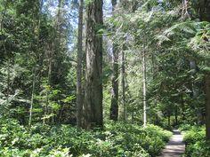 Milner Gardens at Qualicum Beach by Raul P, via Flickr (Vancouver Island)
