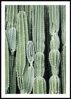 Cactus, poster in de groep Posters bij Desenio AB (8539)