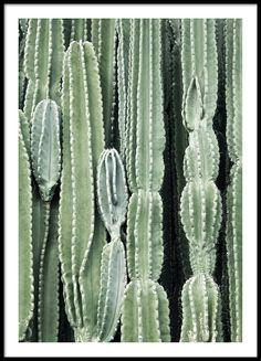 https://desenio.no/no/artiklar/cactus-poster.html