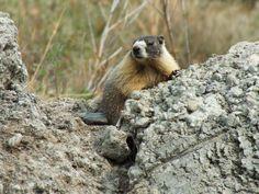 Furry little friend from Lillooet