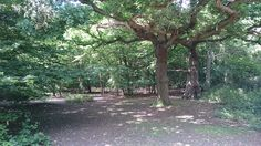How to add EMPHASIS and London's ancient forest http://www.theenglishbureau.com/adding-emphasis/