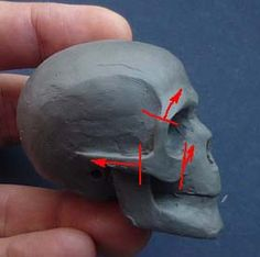 How to sculpt a skull in clay. Plus process photos for sculpting a face over a skull armature. Sculptures Céramiques, Sculpture Clay, Anatomy Drawing, Anatomy Art, Sculpture Techniques, Art Techniques, Sculpting Tutorials, Art Tutorials, Clay Dolls