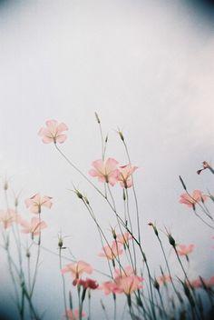 Cứ cho là tất cả những lựa chọn, tất cả những cố gắng của em đều phí hoài đi nữa, thì em vẫn là em, chứ không phải bất kỳ ai khác. Và em tiến tới với tư cách là bản thân mình. Vậy nên hãy vô tư đi.  Cái gì đến sẽ đến. Tôi không nghĩ nữa. Nếu rời xa tôi, hãy nói với tôi đó mới chính là điều làm em hạnh phúc hơn khi ở bên tôi. Thì đó là việc duy nhất tôi luôn muốn làm cho em. Em cứ hạnh phúc mà đi.
