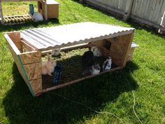 How to feed your rabbits for free from scraps and a rabbit tractor eating grass