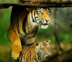 Mama and her cub