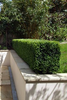 retaining wall hedge Source by anachadwick Steep Gardens, Front Gardens, Kew Gardens, Outdoor Gardens, Garden Retaining Wall, Landscaping Retaining Walls, Home Landscaping, Garden Bench Plans, Dubai Miracle Garden