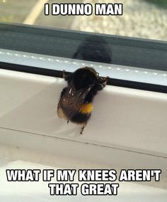 Poor Little Bee - but - you are the 'Bees Knees""