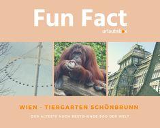 #Wien #Vienna #TiergartenSchönbrunn #Zoo  Wien besitzt den ältesten noch bestehenden Zoo der Welt - Tiergarten Schönbrunn.  Vienna has the oldest still existing and operating zoo in the world - Schönbrunn Zoo  #urlaubsbox #reisen #travel #schönbrunnzoo #viennazoo Schönbrunn Zoo, Tiergarten Schönbrunn, Fun Facts, Poster, Travel, World, Animals, Nice Asses, Wtf Fun Facts