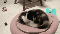 Cats Playing With Portals