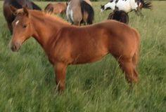 Im for sale ivey.allen57@yahoo.com Reining Horses, Cute, Animals, Animales, Animaux, Kawaii, Animal, Cutting Horses, Animais