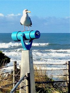 A watchful seagull