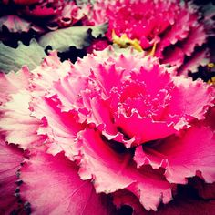 Street flower, Shanghai, China -- Photo by Tora Chung