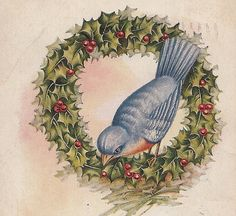 Antique Christmas Greeting Bluebird in Holly Wreath
