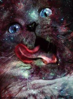 #cats #galaxy #kitten