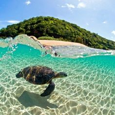 I think I'm going to pin my dreams I have at night. One about a Sea Turtle in Hawaii.