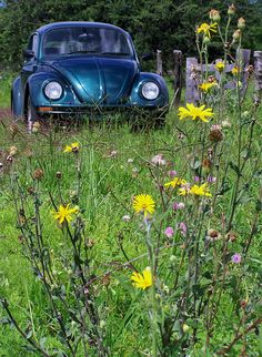 Color is a darker shade of the color of my first Beetle. Beetle Bug, Volkswagen Beetles, Volkswagen Bus, Vw Camper, Gone Days, Bug Car, Cool Bugs, Vw Classic, Vw Bugs