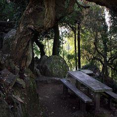 #Parque e Capela da #Senhora da #Saúde - Carvalhos – Vila Nova de Gaia, lugar de culto e zona rica em plantas, com equipamento de manutenção e zona de merendas  http://lgb-foto.blogspot.pt/2014/07/parque-da-senhora-da-saude.html