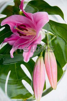 Lelies een prima snijbloem