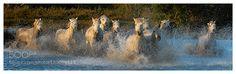 Camargue wild ! by yquem46 via http://ift.tt/28RVo7q