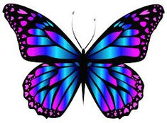 Blue and Purple Butterfly PNG Clipar Image (butterfly images. 🌻 For more great pins go to Purple Butterfly Tattoo, Butterfly Clip Art, Butterfly Drawing, Butterfly Tattoo Designs, Butterfly Pictures, Butterfly Painting, Butterfly Wallpaper, Butterfly Flowers, Butterfly Wings