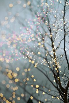 Fairy Lights, Seattle | photography: Georgianna Lane