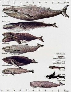 1000+ images about Whale study with K5 on Pinterest ...