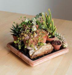 Pelea de macetas - No Linde - Incremental Mini-Gardens #nolinde #moss #succulents