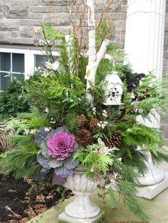 composition-florale-plantes-résistantes-gel au jardin d'hiver en pot