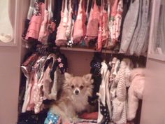 dog has her own closet full of clothes Bedroom Frames, Bedroom Dressers, Bedroom Wardrobe, Bedroom Furniture, Furniture Ideas, Queen Bedroom, Bedroom Bed, Platform Bedroom, Victoria Fashion