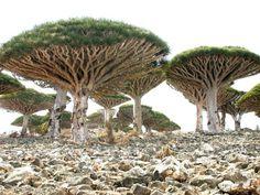 Livets Träd - Livmodern Tree of life -Placenta