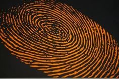 When processing a crime scene, one of the first steps for law enforcement officials is to dust surfaces for fingerprints. There are no two fingerprints in the world that are exactly the same, and often criminals will leave fingerprints behind on many different types of surfaces, which can help investigators solve crimes. There are some types of...