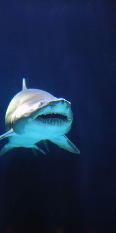 SWIMMING UNDER WATER AND SPOTTING A SHARK CRUISING AROUND!  YIKES!!  :-O