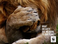 Emotional (of course I would pick a cat). The Most Powerful Ads Of The World Wildlife Fund